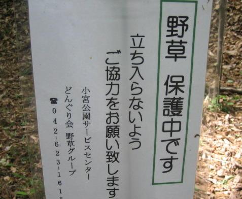 IMG_0976 (2)