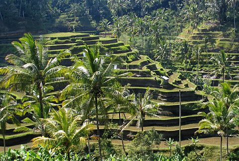 480px-Bali_panorama