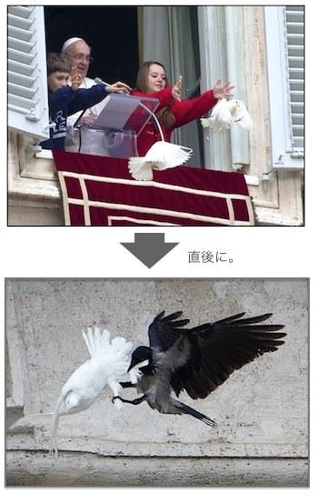dove-attack-05