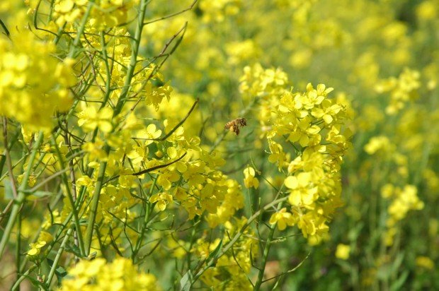 花粉症が止まったグラボヴォイの数字瞑想とアレルギーの本当の理由