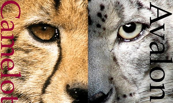 cheetah_snowleopard_med