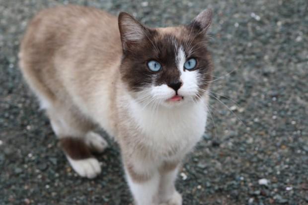 青島の「猫の楽園」と3匹の犬置き去り騒動の顛末
