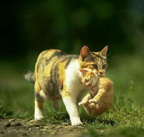 cat-sc-neko_01510