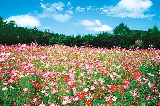 自然治癒力を高めるシンプルな方法とバジャールの9月情報