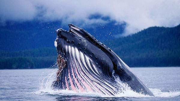 wallpaper-whale-photo-01