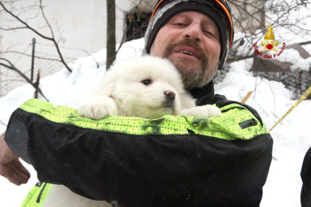 A firefighter holds one of the three puppies found alive in the rubble of the Hotel Rigopiano after the avalange,  near Farindola, central Italy, on January 23, 2017. Vigili del Fuoco/Handout via REUTERS ATTENTION EDITORS - THIS IMAGE WAS PROVIDED BY A THIRD PARTY. EDITORIAL USE ONLY. IMAGE OBSCURED AT SOURCE.S