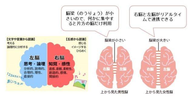 右脳と左脳の仕組み、脳梁