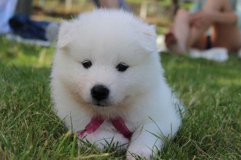 puppyspitz