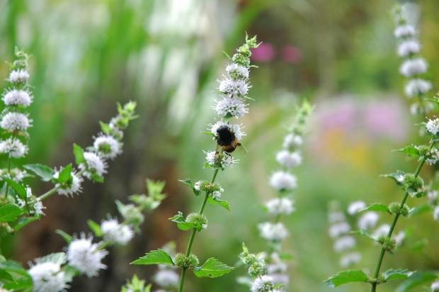 小泉さんの脱原発の真相と妊婦の花粉症対策