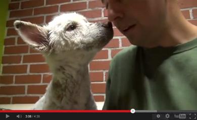 白い犬のまなざしに5次元世界の喜びを知る