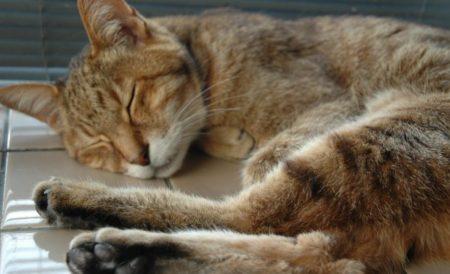 19歳の高齢猫とカルカン