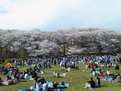 黒船来航160年後の日本の桜にDNAの歴史を想う