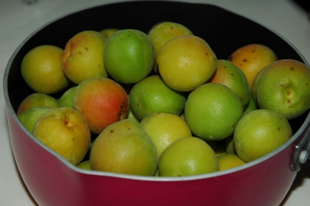 山梨の小梅で梅酵素ジュースを作ってみました!