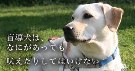 盲導犬オスカーに学ぶ社会病質者の割合とNWOの正体