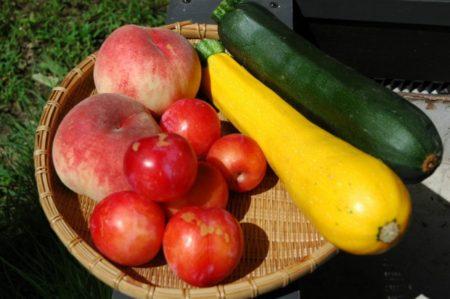 腎機能低下の3ステップと肉食と意識レベルの関係