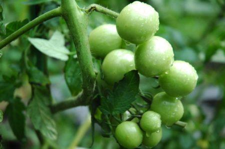 酵素ジュースの作り方と注意点