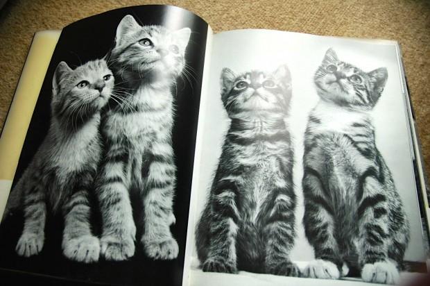 高齢猫の泌尿器系予防とゴロゴロ音の秘密