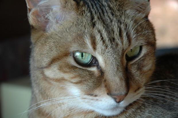 高齢猫と高齢犬に教えられた飼い主の心得と医療費ゼロの極意