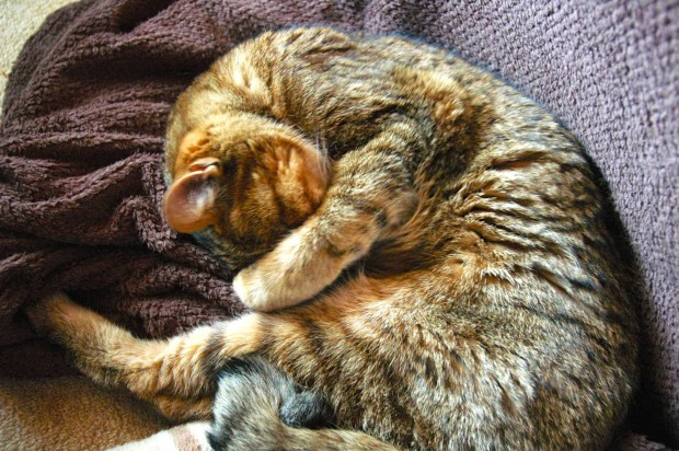 高齢猫が突然カルカンを食べなくなった理由は?