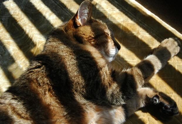 増えている動物たちの異変と高齢猫の夜鳴き対策