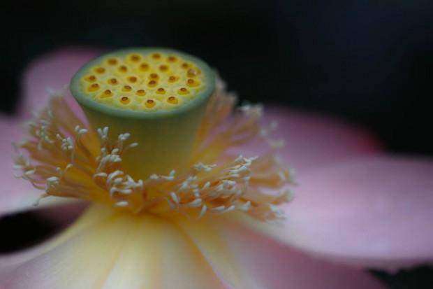 蓮の花の象徴的意味とチャクラの実在性