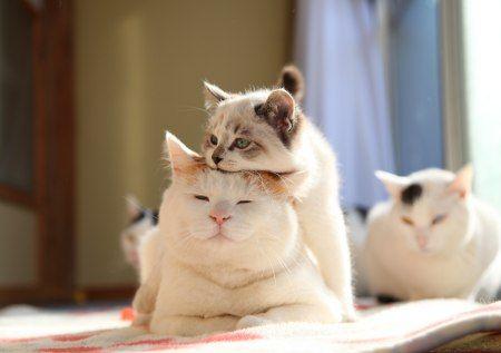 高齢猫の安らかな最期のための留意点と動物の来世