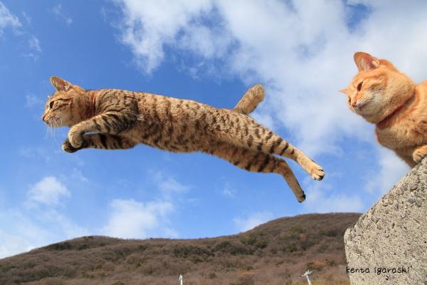 高齢猫の大往生とホメオパシーとフラワーエッセンスの違いと抗生剤の使い方