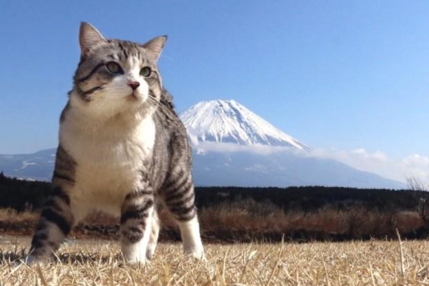 107歳の高木波恵さんの伝書猫に学ぶユングの「中年の危機」の越え方
