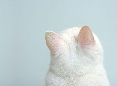 急ぎ過ぎな日本人に「耳かき」の耳寄りな話