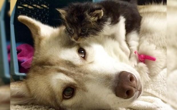 猫が犬より増加している理由と天寿をまっとうした「はな子」さん