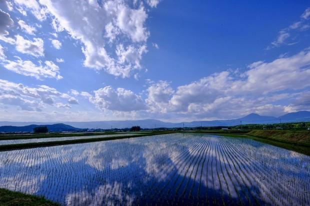 「生まれ変わりの村」の森田健さんの写真活用法と人が動物に転生する割合