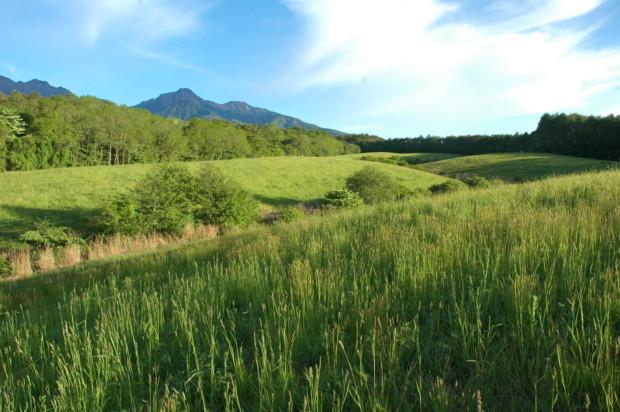 日本の誇れない世界一とボイコットが始まったモンサント製品