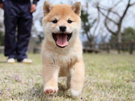 一筋縄でない坂本龍馬&三宅洋平とTOKYO ZEROキャンペーン ~ すべてのペットが幸せになれる東京へ~