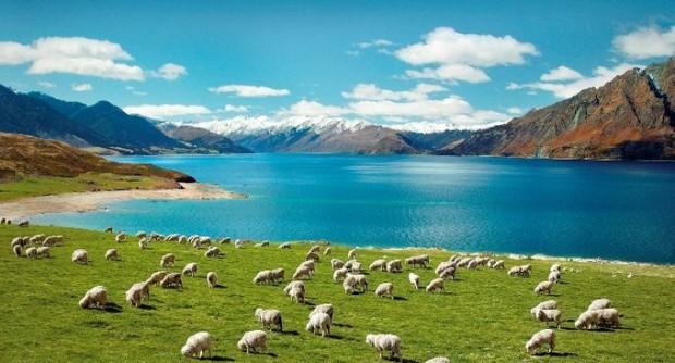 福島と連動するニュージーランド地震の人工地震説と謎の光