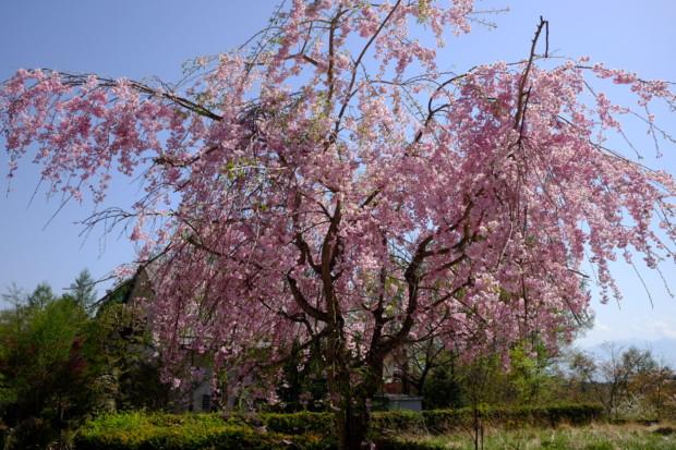 「TOKIO」の山口クンどころじゃない「NHK」の破廉恥三昧と第六密度が伝える「願望の克服」の是非