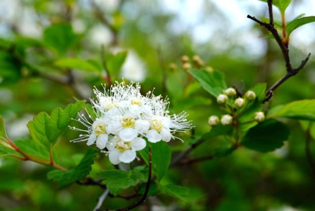 「水出し緑茶」が安眠&免疫力UPに効く理由と人生にも応用できるポール・スミザーさんの庭づくり