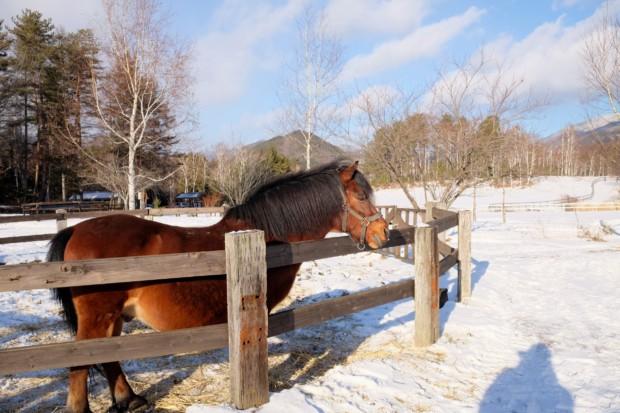 本州唯一の在来種を守る「木曽馬の里」と奈良井宿