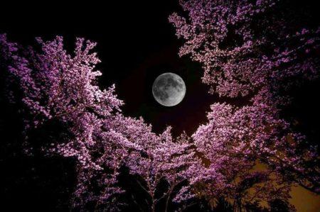 「無意識」に作用する月星座の影響とバッチフラワー効果を実感しました〜