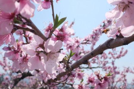 4月9日「大仏の日」に知る聖武天皇への鎮魂と「新しい世界観」にシフトする方法