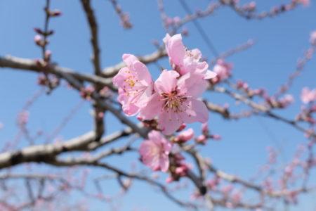 ロックダウンを吹き飛ばす桃源郷〜大井俣窪八幡神社「櫂」で見つけたお宝