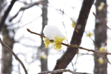 志村けんさん逝去に学ぶパンデミック肺炎に関係するチャクラの活性化