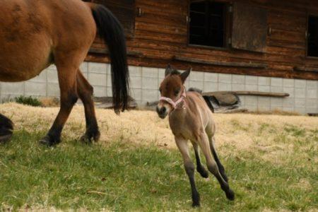 大人猫の甘噛みが治った「オペラント条件づけ」と出産ラッシュの木曽馬