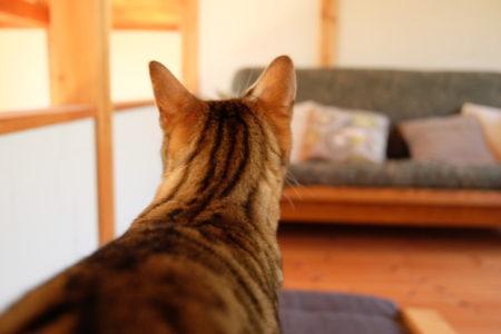 初めての猫連れ「移動・旅行」体験とコロナ渦の影響それぞれ