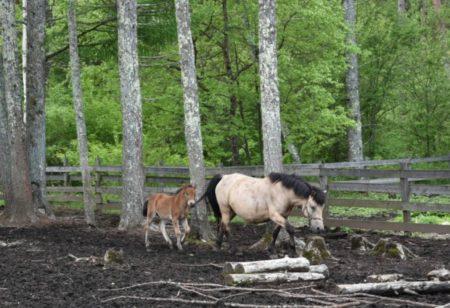 リベンジ「木曽馬の里」は仔馬の親子もいてパラダイスでした〜